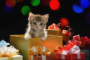 christmas-safety-cats-