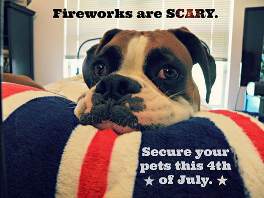 fireworks-scary-pets
