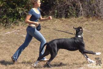 dog-exercise-port-charlotte-fl