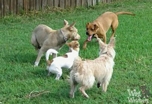 north port fl dog daycare