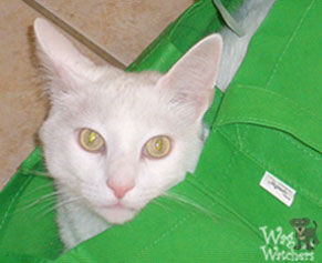 pet-sitting-cats-englewood